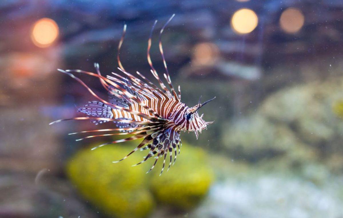 Biserujka i akvariji u Baški i Krku ponovo otvorili svoja vrata