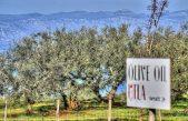 Krčki Utla olive u finalu utrke za najbolji hrvatski OPG, glasati možete i vi!