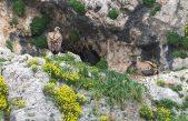 50 godina krčkog ornitološkog rezervata, prvog rezervata za zaštitu supova na svijetu
