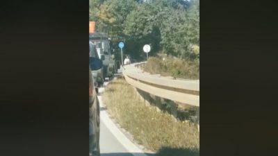 VIDEO Ovakvu šetnju ljubimca ne viđa se baš često: Magarca za traktor pa u đir po otoku