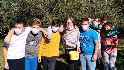 Uspješna berba u maslinicima krčkih osnovnih škola: Vrijedne male ruke ukupno ubrale oko 175 kg maslina