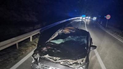 U silovitom srazu automobila i krave na Krku samo pukom srećom nije bilo poginulih