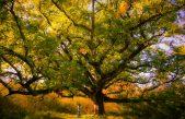 FOTO/VIDEO Ovaj šumski div svoje tajne skriva već 400 godina. Čeka vas iznad Čavlene