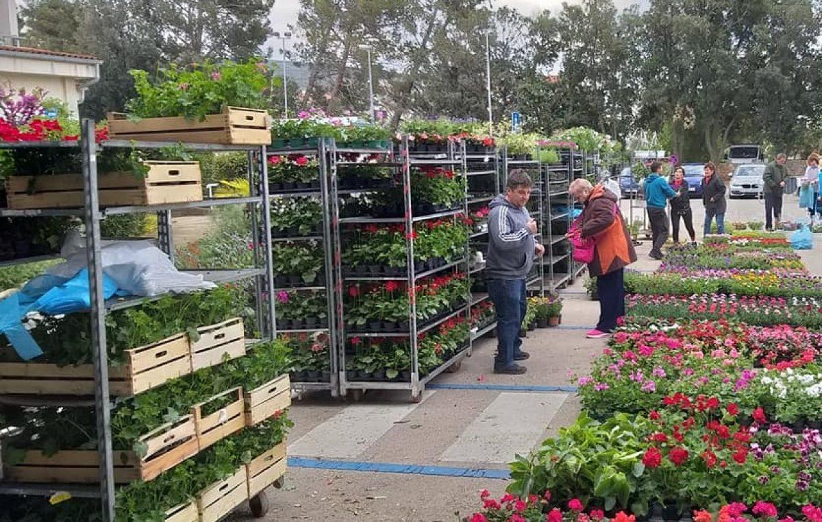 """""""Cviće moje"""": U subotu akcija prodaje sezonskog cvijeća u Puntu"""
