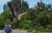 """FOTO Novi """"orli"""" na kvarnerskom nebu: 7 mladih supova poletjelo iz Oporavilišta na Cresu"""
