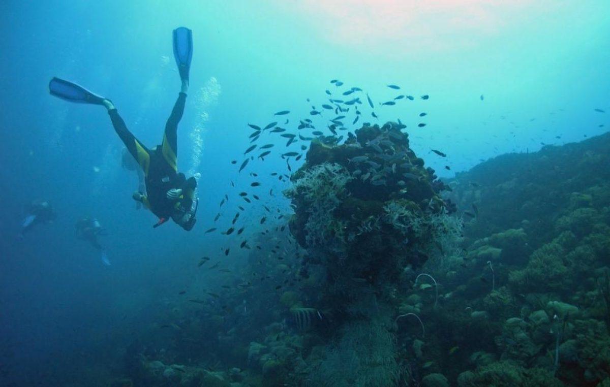 Krčko podmorje: Znanstveno-stručni skup na temu Pismenost funkcioniranja ekosustava Jadranskog mora