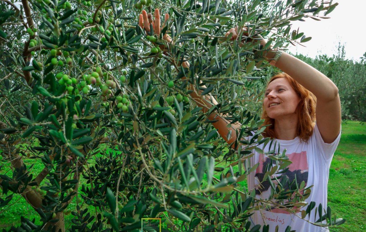 Jedinstvena Olive touch priča u Malinskoj spaja masline i wellness za tijelo – ali i nepce
